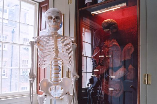Model skeleton in the Student Science Centre