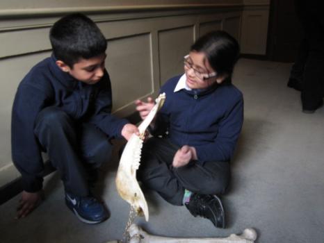 Children looking at a fake bone