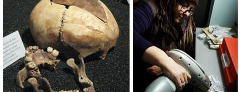 Skulls on display in a museum. Photo of Dana Goodburn-Brown, an archaeological conservator, holding a tool